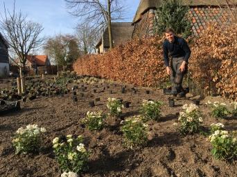 Aanleg van een tuin
